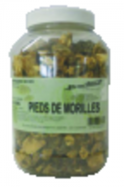 Queues de morilles